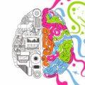 cervello-plasticità-neuronale-neuroplasticità