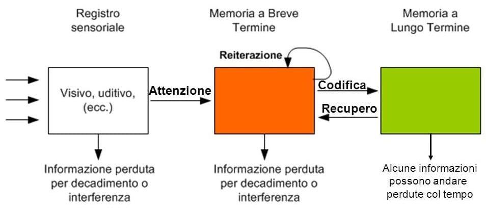 Atkinson-e-Shiffrin-modello-tripartito-della-memoria